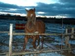 Rodeo (i Roman, e. Roosi) Foto: Mailika Saviorg