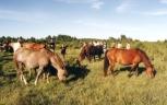 Laidevahe pastureland. Foto: Ago Ruus