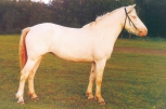 Halekollane (rahva keeles albiino) (cremello) - aeCcrCcr/AeCcrCcr