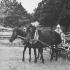 Eesti hobused Ruhnu saarel. Foto: Rannarootsi muuseum