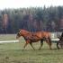 Kristiina Iilane ja Mariin Lepp, hobune on Revüü.