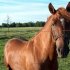Rodeo, omanik. Angela Noor. Foto: Mailika Saviorg