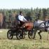 Eesti hobune rakendis / Lisatud fotogalerii - 17.12.2011
