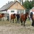 Eesti hobune