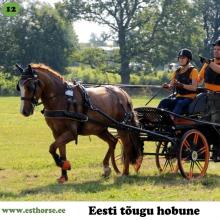 Aramis on sündinud 2010. aastal Tartumaal, i. Absoluut, e. Leiu, kasvataja Kati Kiipsaar, omanik Pille-Riin Reinaus.  Aramise müügipilti nähes tekkis Pille-Riinil koheselt side ja teadmine, et selle hobuse peab ostma. Nüüdseks on Aramis tema käe all neli aastat teinud rakendisõidu treeninguid. Palju on käidud ka rahvusvahelistel võistlustel ning võidetud hulga medaleid ja karikaid, sealhulgas tuldud Eesti meistrivõistlustel kahel korral hõbedale. Aramis on oma iseloomult väga sõbralik ja seltskondlik. Suurepärast töötahet on tal alati jätkunud ja seda just vankrit vedades.  Foto autor: Ilze Dīcmane-Dauberga
