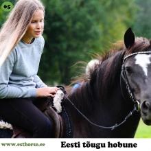 Tilaila on sündinud 2014. aastal Viljandimaal, i. Tingoran, e. Asti, kasvataja Ly Animägi, omanik Sirja Saar.  Tilaila võitis praeguse omaniku südame oma armsa olemuse tõttu: rahulik, tasakaalukas ja kuulekas ning keegi polnud talle seda õpetanud – loomult selline. Tilaila on unistuste hobune, ta hoiab oma ratsanikku, ei karda liikuda maanteel ega looduses, liigub hästi matkaradadel ja armastab järves ujuda. Tilaila õppis kõigepealt rakmed selgeks, siis hakkas vedama vankrit ja sai ka kogemused ree vedamisel. Seejärel õppis ilma ühegi tõrketa ratsanikku kandma. Tilaila õpib väga kiiresti, kuuletub hästi, teab häälkäsklusi ja õpib edasi töötama ilma valjasteta. Tilaila on mõeldud tulevikus laste teraapiahobuseks ja pulmakalessi saatjahobuseks. Hüpped ja takistused talle eriti ei meeldi, pigem on suund koolisõidule pehme ja graatsilise sammu tõttu. Sellest sai alguse ka tema lastelemmiku karjäär, ta on võitnud paari noore ratsutaja südamed ning nüüd õpitakse ühiselt ka maatööd.   Foto autor: Sirja Saar