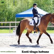 Rekkor on sündinud 2009. aastal Harjumaal, i. Raksel, e. Viko, kasvataja OÜ Kolgaküla Tall, omanik Linda Kask.   Rekkor on suuremat kasvu kõrb eesti hobune, kelle on ka vastavalt suur süda ja võistleja hing. Kodus on Rekkor tavaline maatõugu hobune, kes sõidutab lapsi ja veab kelku kui vaja ja võib olla üsna jonnakas. Võistlustel meeldib talle aga särada. Väga harva, kui ta auhinnalisele kohale ei tule ja seda nii takistussõidus kui ka koolisõidus. Muuhulgas on ta edukas olnud eesti hobuste hüppevõimsuses ja harrastajate meistrivõistlustel koolisõidus. Ta suudab hämmastada lisaks oma ratsanikule ka pealtvaatajaid.  Foto autor: Külli Tedre-Gavrilov