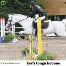 Anakee on sündinud 1997. aastal Pärnumaal, i. Anti, e. Petra, kasvataja Elle Suvi, omanik Tika talu.  Anakee on erksa loomuga täkk, üks sportlikuma tüübi esindajaid eesti hobuste seas. Tema nimele saab kanda kümned järglased, lugematul hulgal poodiumikohti nii takistussõidu kui koolisõidu võistlustelt, nende seas mitmed medalid meistrivõistlustelt.  Tänaseks päevaks on väärikas eas härrasmees jätnud selja taha võistlushobuse karjääri ja naudib pensionipõlve Tika talus, kus on ta veetnud suurema osa oma elust. Märasid ootab Anakee aga endiselt külla!  Foto autor: Ago Ruus