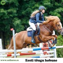 Rodotendron on sündinud 2006. aastal Raplamaal, i. Ruttar, e. Valla, kasvataja ja omanik Veljo Sinikas.   Rodotendron on suure hingega ja väga hea hüppetahtega. Ponispordis on olnud edukad ka tema isa Ruttar, ema Valla ja täisvend Romeo. Rodotendron on võistelnud edukalt erinevate ratsanikega ja tema trumbiks on takistussõit.