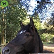 Robinson on sündinud 2013. aastal Jõgevamaal, i. Rüütel, e. Romina, kasvataja Kaie Peterson, omanik Meelis Tarto.   Robinson on väga sotsiaalne ja uudishimulik poni. Ta on alati kõige julgem ja soovib inimeselt kõige rohkem tähelepanu. Ta on küll ruun, kuid märade peale erutub ta väga, samuti meeldivad talle laigulised ja hallid hobused, kelle juuresolekul on teda kohati keeruline rahulikuna hoida. Robinson on väga sportliku kehaehituse ja suure tahtejõuga loom, kellel on palju potentsiaali takistussõidus tänu oma kiiretele jalgadele ja täpsetele pööretele. Lisaks on tal esineja hing ning ta näitab ennast alati parimast küljest. Ta on ka väga tark ja õpib uusi trikke meeletult kiiresti.   Foto autor: Liisa Delores Tarto
