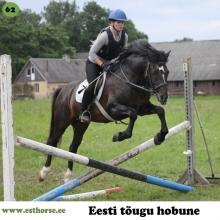 Euro on sündinud 2002. aastal Pärnumaal, i. Elkar, e. Andra, kasvataja ja omanik Taimi Usin.   Euro oli oma emale teine järglane. Juba sündides oli ta väga pikajalgne ja sportliku välimusega. Nooruses meeldis talle väga hüpata, oli ka juhuseid, kus Euro viis vähem oskajaid ratsanikke ise hüppele. Kui täkk oli nelja aastane, alustas omanik tema treenimist sõidu- ja veokatseteks Tori Hobusekasvanduse ringrajal. Oli väga huvitav jälgida, kuidas Euro katsetas erinevaid viise traavipikenduseks, kuni lõpuks ise avastas, et kui toob tagumised jalad esimestest mööda, on parem joosta. Treeningute ajal viibisid raja lähedases koplis alati märad ning neist möödudes läks täku traav kohe eriti pikaks ja uhkeks. Omanik palus, et ka võistluspäeval võiksid need samad märad seal koplis olla, et Eurole natuke motivatsiooni pakkuda. Ei tea, kas tänu sellele, kuid igatahes püstitas Euro sel võistlusel 1 km traavi distantsi rekordi 2.58, mida pole tänaseni suutnud keegi ületada. Oma järglastele pärandab Euro lisaks kõrgele jalale ka väga head ja inimsõbralikku iseloomu.  Foto autor: Katrin-Liis Rumessen