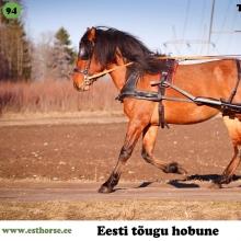 Torvald on sündinud 2014. aastal Läänemaal, i. Tommi, e. Roosi, kasvataja Arvo Sarrapik, omanik Andreas Pernits.  Esimesel kohtumisel Torvaldiga polnud tal nimegi, oli vaid paarinädalane. Juba siis oli ta kompaktse kehaga, elav ja lahtise liikumisega ning tuli kohe uudistama. Nimeks sai talle pandud Torvald, mille tähenduses on Thori võim ja seda võimu tal on. Samas võtab ta kergelt õppust, rakendisse minek oli lihtne – juba kolmandal korral pärast ohjamist läks vankri ette ja ei teinud sellest mingit numbrit. Nüüdseks on ta käinud edukalt ka paarisrakendis. Ratsa on temaga mugav sõita ja ta võiks sobida nii kooli- kui takistussõitu. Torvaldi kõige tugevam allüür on traav, see on avar, hea esijala liikumisega, lennukas, tasakaalus ja selge rütmiga. Torvald on karjas alati esimene, kes juurde tuleb ja võib muutuda lausa tüütuks, sest tal on alati vaja kõike näha ja igal pool esimene olla. Torvald on hästi väljendunud tõutüübiga, eesti hobusele omaselt väga ökonoomne, tasakaalukas, mõistlik, koostöötahteline ja olukorda hästi hindav täkk.  Foto autor: Andreas Pernits