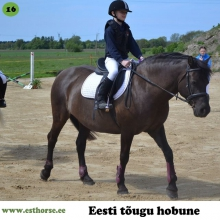 Anna on sündinud 2007. aastal Saaremaal, i. Aku, e. Rona, kasvataja Aili Kirst, omanik Massu Mõisa Tallid OÜ.  Anna on Massu ratsakooli läbi aegade kõige populaarsem hobune. Kui lastel oli valida, millise hobusega nad tahaksid sõita, oli Anna pea alati esimene valik. Paljud meie talli ratsanikud on oma esimese galopi teinud Annaga, sest temaga on see olnud turvaline ja mõnus. Anna on ka veidi vastuoluline hobune, sest pole ratsutajat, kes poleks kirunud seda kui laisk Anna on. Laste sõnul peab teda paluma rohkem kui teisi hobuseid, kuid see ei tee temast halvemat hobu. Hetkel viibib anna emapuhkusel ja trennides ei käi, kuid naaseb kindlasti algajate absoluutse lemmikuna!