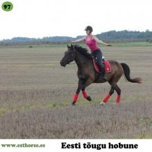 Radar on sündinud 2012. aastal Valgamaal, i. Rodeo, e. Toone, kasvataja Maarika Vahter, omanik Egle Veske.   Radar on suuremat kasvu eesti hobune, iseloomult rahulik, mõistlik ja koostööaldis. Suhteliselt pommikindel ja metsas turvaline kaaslane, väga harva kui tal jooksutuurid tulevad. Algajad lapsed saavad temaga väga hästi läbi, ta on lastega võistelnud nii kooli- kui takistussõitu. Radar lubab endaga teha kõiki toiminguid, lisaks igatpidi seljas turnida ja kõhu alt läbi ronida. Veekogusi armastab ta täiega, ülepeakaela võib ujuma minna. Samuti meeldib talle hüpata nii paltsil kui ka metsas. Teiste hobustega karjas on Radar leplik, ka muude loomadega saab hästi läbi. Toidu peale on valmis kõike tegema ja muidugi jala tõstmine kõrgele on lemmiktegevus, mis eelmises kodus selgeks õpetati.  Foto autor: Mario Udaltsov