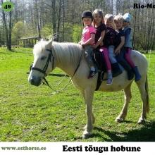 Rio-Moskito on sündinud 2002. aastal Saaremaal, i. Ruttar, e. Araia, kasvataja Kalvar Ige, omanik Halliki Hanso.  Rio-Moskito on tillukest kasvu aga suure südamega mära. Rio puhul on tegemist ideaalse perehobusega – ta on alati heatahtlik, kuulekas ja kannatlik. Ta on õpetanud ratsutama kümneid väikeseid lapsi ja täiskasvanuid. Ka oma suure pere lastele on ta alati