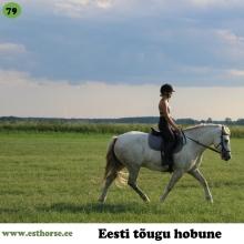 Android on sündinud 2013. aastal Saaremaal, i. Anakee, e. Arabella, kasvataja Tika talu, omanik Marleen Tiirik.  Android, hüüdnimega Andu, on pealtnäha täiesti tavaline eesti hobune, kuid seest tohutult suure südamega. Ratsutades on ta hämmastavalt aktiivne, suure energia ja töötahtega. Ette õpetades teadis esimesest hetkest kuidas mis käib ning ega muud üle ei jäänudki, kui midagi lohisevat juba taha panna ning sõitma minna. Ta on hästi uudishimulik hobune, kes tohutult armastab hüpata, kuid vajab tõkete ohutuks tunnistamisel ratsaniku toetust. Kui muidu on tegu väga rahuliku, isegi ükskõikse hobusega, siis lennuka sammuga trenni minnes on ta valmis ratsaniku heaks andma endast kõik. Samas mõistab ta hästi, kes on algaja või oskajam ning käitub algajatega korrektselt ja rahulikult, isegi kontrollib, kas nendega kõik ikka hästi on. Tegemist on tõeliselt aruka ja intelligentse hobusega. Esimesest päevast saadik on rahul jala ja kõhu all siiberdavate kanade, koerte, kassidega. Koplisse minnes ootab Android alati sügamist ja massaaži - keerab tagumiku inimese poole ja palub oma lemmikkohta mudida. Pähe oskab teha kõige armsama näo, et kommi suhu saaks.